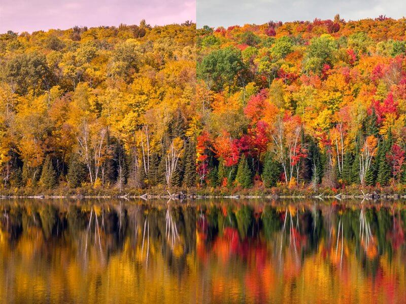 fall-colors-cvd-vs-normal